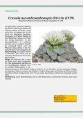 Lapidaria margaretae - FGaS - Page 6