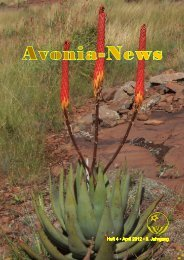 Aloe reitzii var. reitzii - FGaS