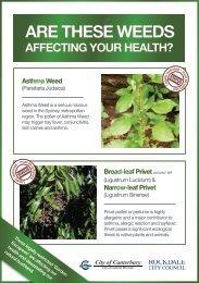 Asthma Weed (Parietaria Judaica) Factsheet - Canterbury City Council