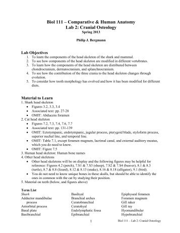 Biol 111 – Comparative & Human Anatomy Lab 2: Cranial Osteology