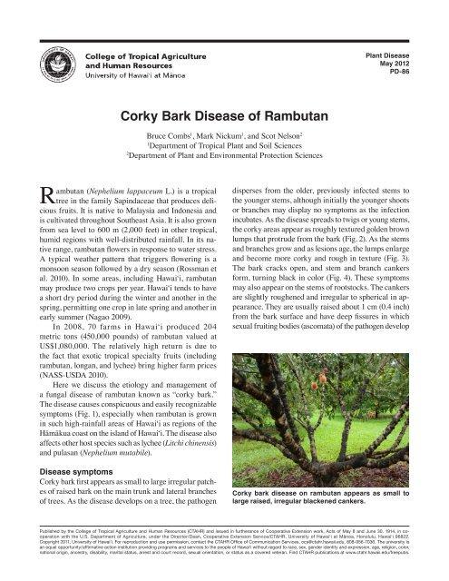 Corky Bark Disease of Rambutan - ctahr