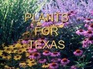 Texas Tough Plants - Dallas Arboretum Trial Gardens