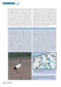 als PDF - Dachverband Deutscher Avifaunisten - Page 5