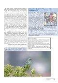 als PDF - Dachverband Deutscher Avifaunisten - Page 6