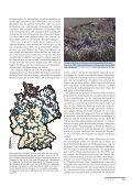 Graugänse, Gänsegeier und Kreuzschnäbel - Page 2
