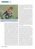 Graugänse, Gänsegeier und Kreuzschnäbel - Page 5