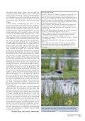 Graugänse, Gänsegeier und Kreuzschnäbel - Page 6