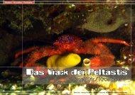 Das Wrack der Peltastis - DiveInside