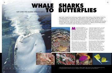 Indonesia - Whale Sharks To - Dive The Blue . net