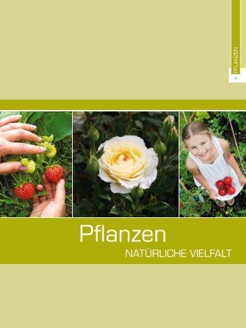 7. Pflanzen