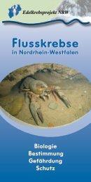 Broschüre Flusskrebse in NRW - Edelkrebsprojekt NRW