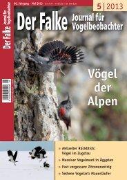 als PDF - Der Falke