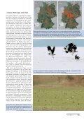 als PDF - Der Falke - Seite 3