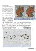 als PDF - Der Falke - Seite 7