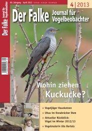 PDF 1 MB - Der Falke