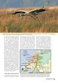 als PDF - Der Falke - Seite 6