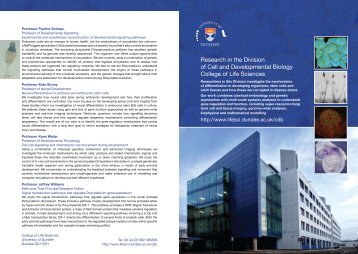 Research in the Division of Cell and Developmental Biology College ...