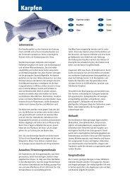 Karpfen - Fisch