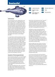 Seeteufel - Fisch
