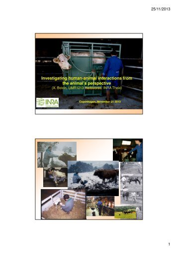 Investigating human-animal interactions from the animal's perspective