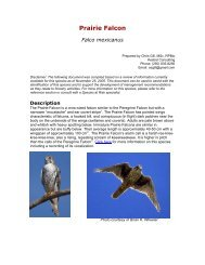 Prairie Falcon Guide 2007.pdf