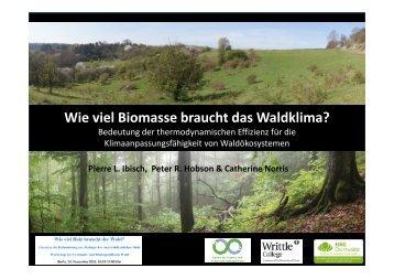 Ibisch_Wieviel Biomasse benötigt das Waldklima