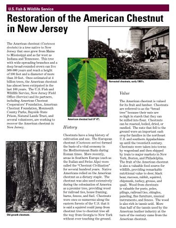 Restoration of the American Chestnut in New Jersey - U.S. Fish and ...
