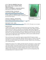 Valley Elderberry Longhorn Beetle - U.S. Fish and Wildlife Service