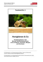 Honigbienen & Co - Gartenarbeitsschulen