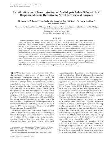 Identification and Characterization of Arabidopsis Indole ... - Genetics