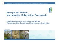 Biologie von Weiden-Ufergehoelze und Gehoelzpflege - Logo klein ...
