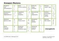 Knospen-Memory - GLOBE