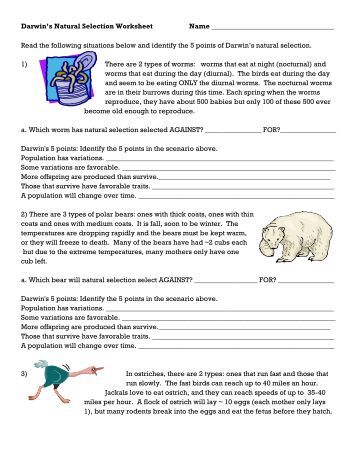 Evolution by natural selection worksheet answer key