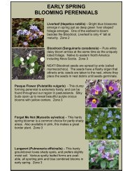 early spring blooming perennials - Greenland Garden Centre