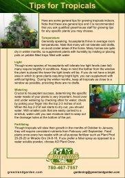 Houseplant Tips - Greenland Garden Centre