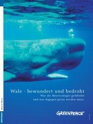 Wale - bewundert und bedroht - Greenpeace-Gruppe Stuttgart