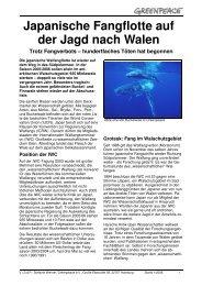 Japanische Fangflotte auf der Jagd nach Walen - Greenpeace ...
