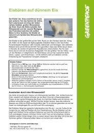 Eisbären auf dünnem Eis