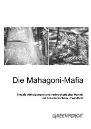 Die Mahagoni-Mafia - Greenpeace