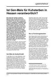 Ist Gen-Mais für Kuhsterben in Hessen verantwortlich? - Greenpeace