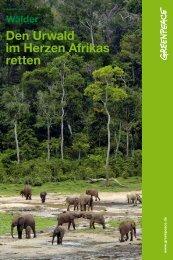 Den Urwald im Herzen Afrikas retten - Greenpeace