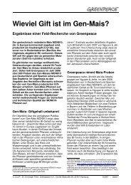 Wieviel Gift ist im Gen-Mais? - Greenpeace