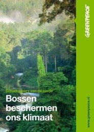 Bossen beschermen ons klimaat - Greenpeace Nederland