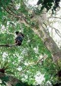 Le piLLage des forêts du congo - Greenpeace - Page 5