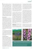 Mehrjährige Rittersporne und ihre unterschiedlich gute Garteneignung - Seite 2