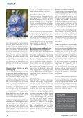 Mehrjährige Rittersporne und ihre unterschiedlich gute Garteneignung - Seite 3