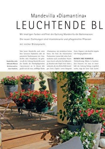 Leuchtende Blust (PDF) - bei GREEN Pflanzenhandel GmbH