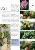 Leuchtende Blust (PDF) - bei GREEN Pflanzenhandel GmbH - Seite 2