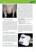 Eutergesundheit - Grenzlandschafe - Seite 5