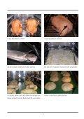 Anwendungshandbuch SelfCooking Center® - Grimm-Gastrobedarf - Page 7